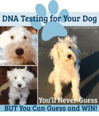 DNA Testing for Your Dog