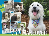 Pink's Annual Pet Makeover - May 2019