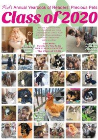 Pink's Annual Pet Yearbook - May 2020